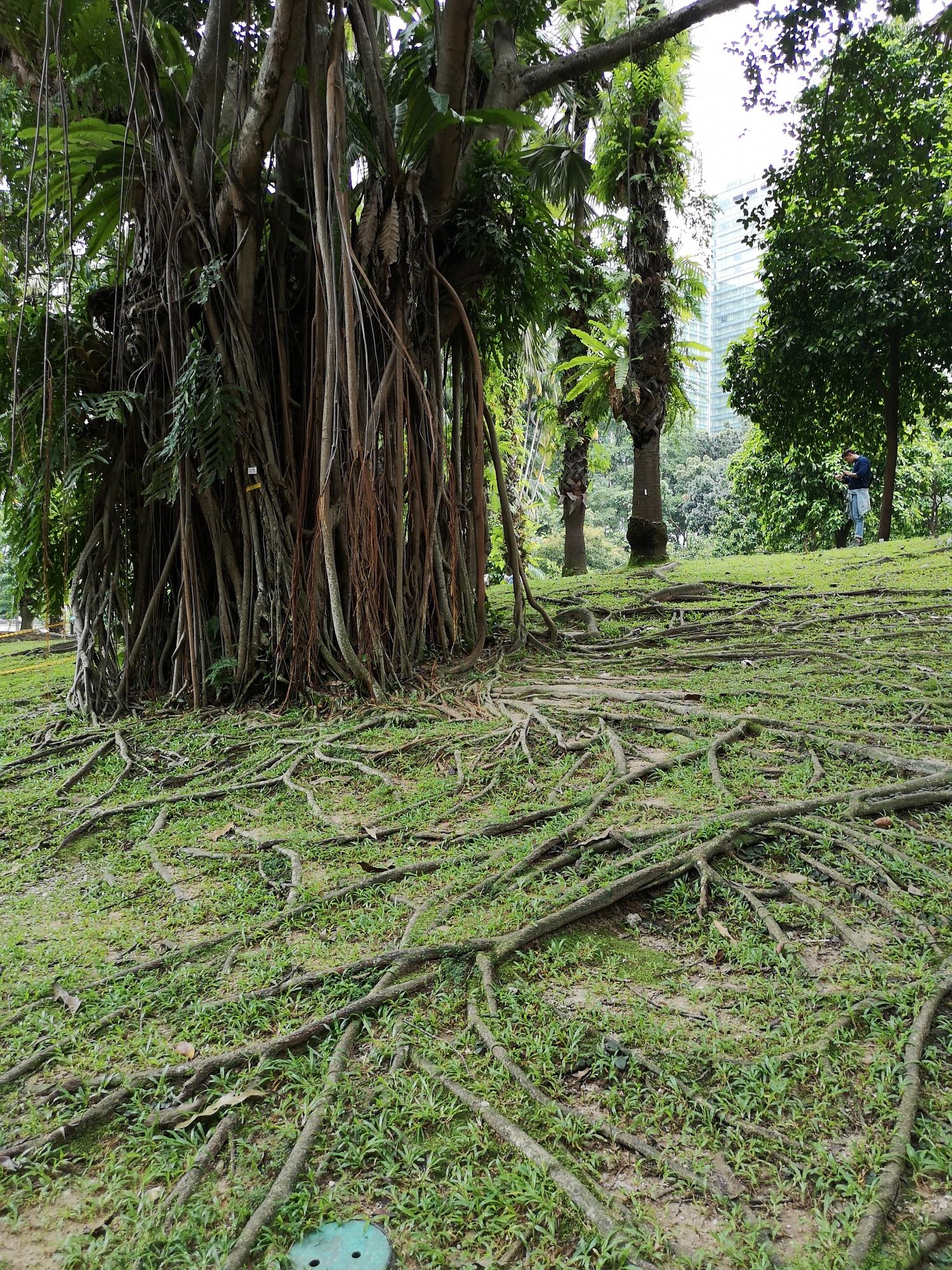 des arbres avec des racines dans tous les senses